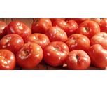 Fresh Northeast Grown Vine Ripe Tomatoes