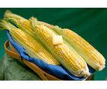 Fresh Northeast Grown Sweet Corn