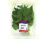 Fresh Basil