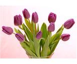 10-Stem Tulip Bunches