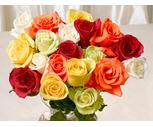20-Stem Rainbow Rose Bunch