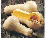Fresh Acorn, Buttercup or Butternut Squash