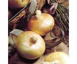 Fresh Sweet Vidalia Onions