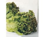 Fresh Red, Green Leaf or Romaine Lettuce
