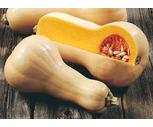 Fresh Organic Butternut Squash