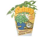 """Healthy Greens"" Oat Grass or Catnip"
