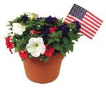 Seasonal Flowering Patio Planter