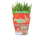 """Healthy Greens"" Fresh Oat Grass or Catnip"