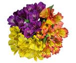 Deluxe Rainbow Alstroemeria Bunches