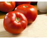 Fresh Hot House Beefsteak Tomatoes