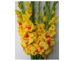 Seasonal 5-Stem Sunflower or 7-Stem Gladiola Bunches
