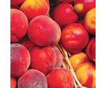 Fresh Artisan Organic Peaches or Nectarines
